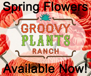 Groovy Plants Ranch - Block